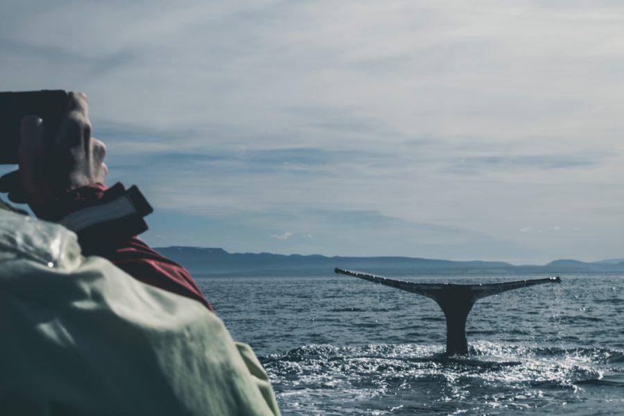 野生動物に可愛いという言葉を使う人に対して思うこと【地球環境をサーファーとして考える】